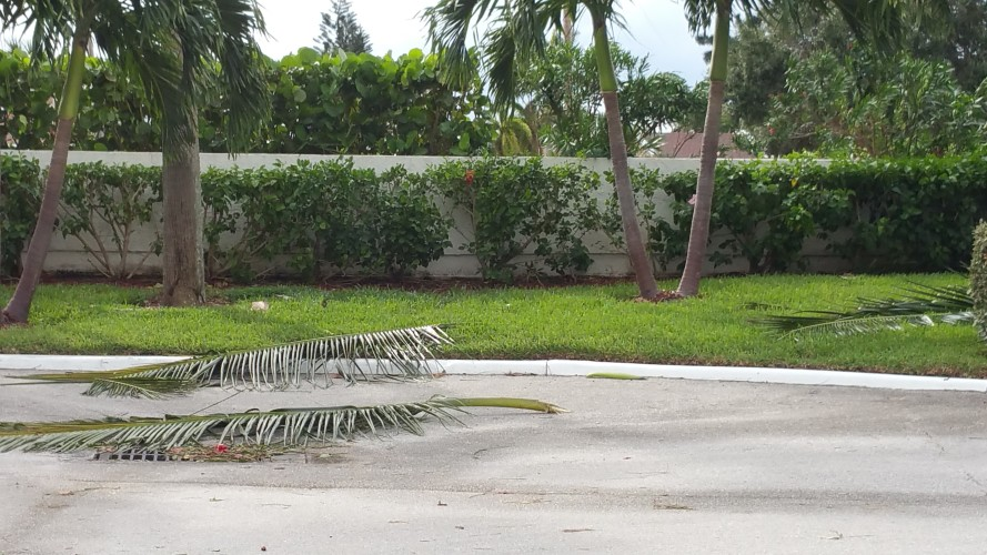 Palm fronds in driveway